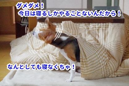寝つき 4