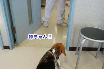 ワクチン 4