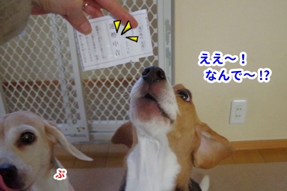 おみくじ 7