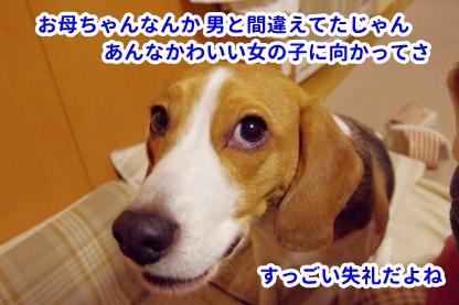 コットンちゃん 5