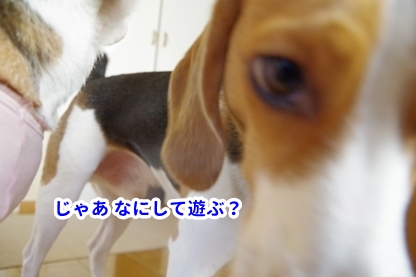 犬目線 5