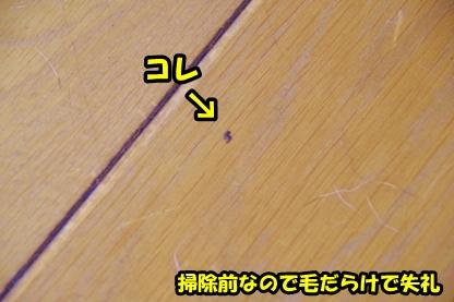 犬目線 2