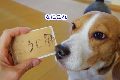 犬目線 3