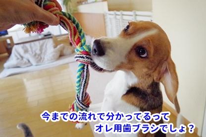 ロープ 1
