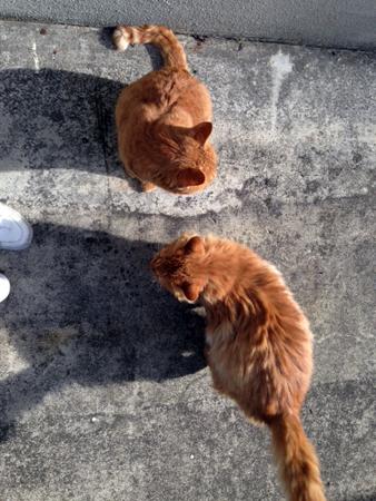 猫2匹2015.12.9①