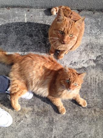 猫2匹2015.12.9③