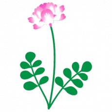 m_f_flower2232.png