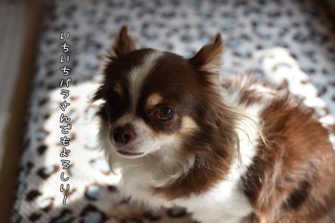 DSC01940206.jpg