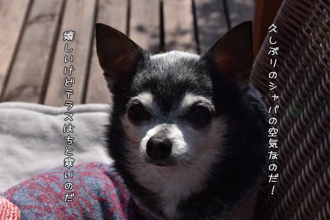 DSC05940229.jpg