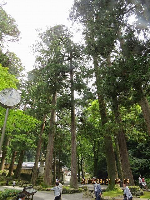 IMG_6786●杉の巨木林