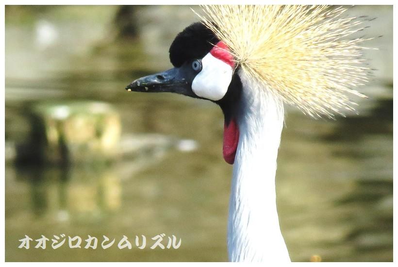 IMG_0031 (2)