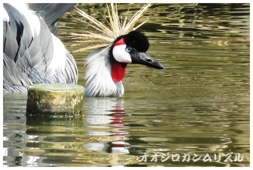 IMG_0032 (2)