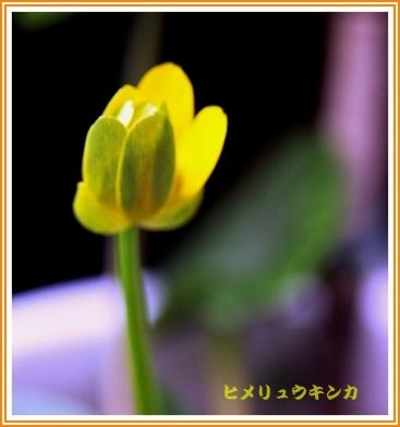 IMG_0009_20160308142555d3f.jpg