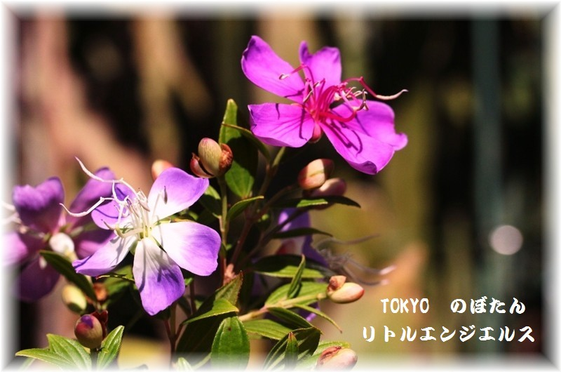 IMG_0010_201511061454122f1.jpg