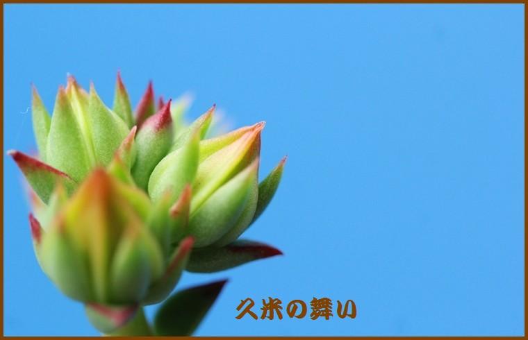 IMG_0017_201511131826145f8.jpg