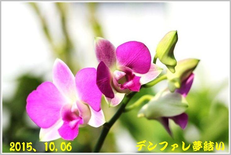 IMG_0029_20151120165407173.jpg