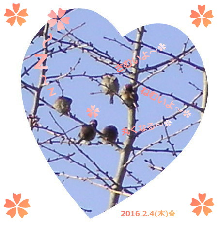 花ブ20160204-2