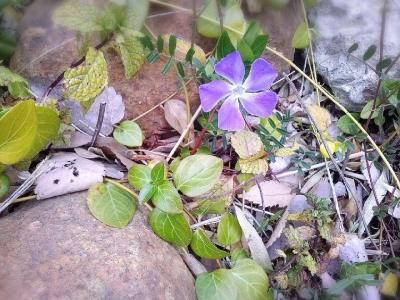 16-03-06-17-10-29-522_deco.jpg