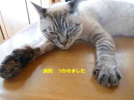 20150809クレアくんimage001②