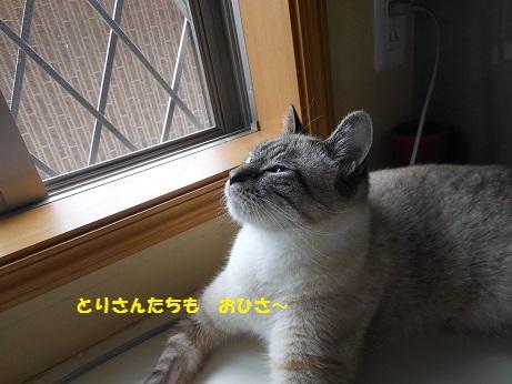 20150809クレアくんimage005②