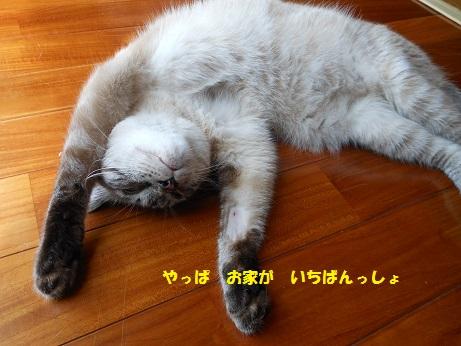 20150809クレアくんimage007②