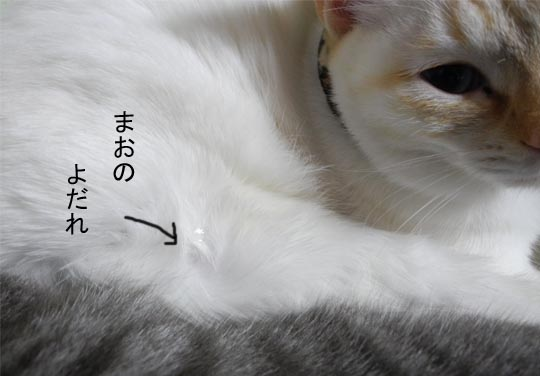 201512gatu28 003bro