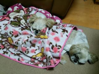 みーちゃんしーちゃん寝る