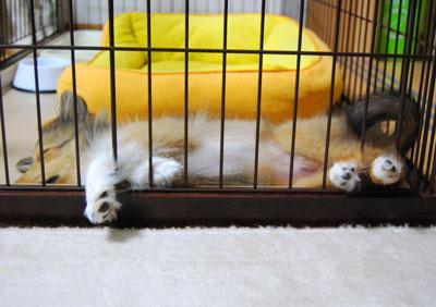 安眠妨害されるハル。