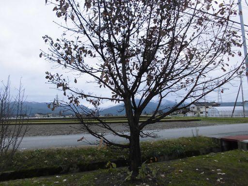 ajyu1206-1.jpg