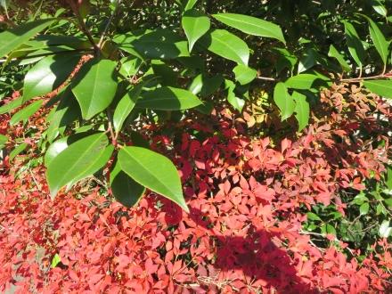 大手公園、赤と緑の葉