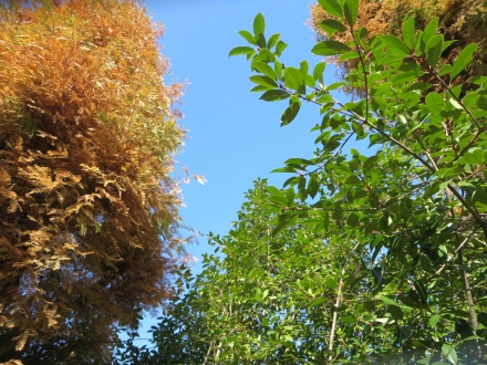 大手公園、欅と緑