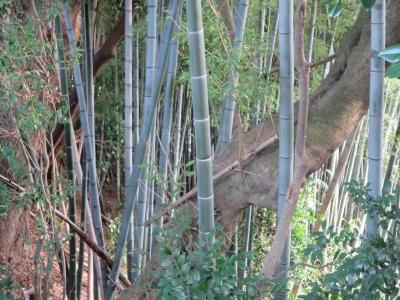 一夜城の群竹
