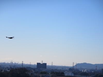 湘南平と飛ぶ鳥