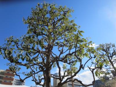 市役所駐車場わきの樹