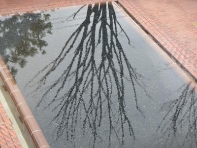 文化会館の池、表面