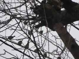 樹に雀の実