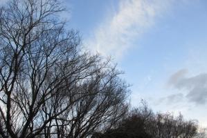 冬の樹と雲