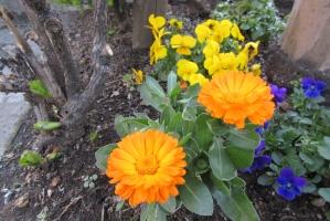 泉町の花壇