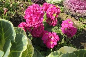 中町公園の赤花です