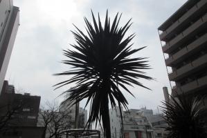 中町公園ツンツンの樹①