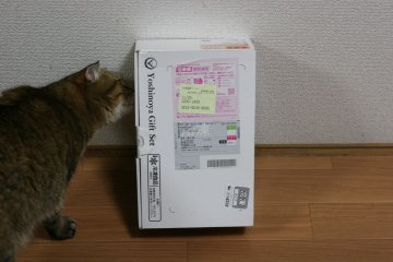 suzu748.jpg