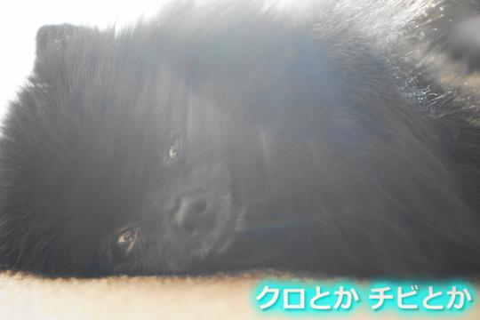 540px20151212_FUGA-02.jpg
