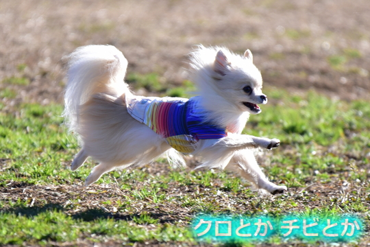 540px20151229_MiTo-01.jpg