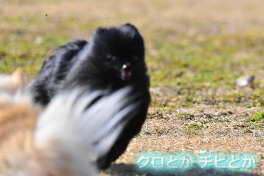 540px20160205_MiTo-05.jpg