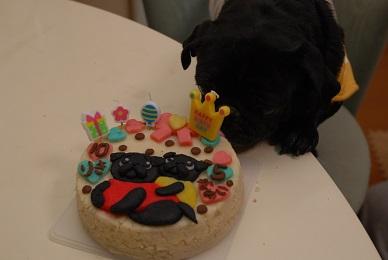 やった~ケーキだ
