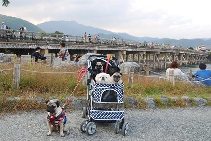 パグッコと渡月橋