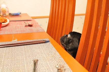 ナニ食べるんだ?