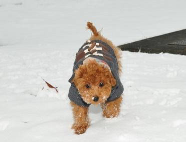 雪、初体験