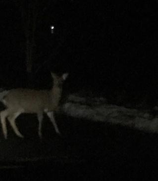 し、鹿だぁ~~
