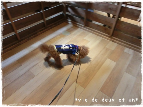 20150830blog5.jpg